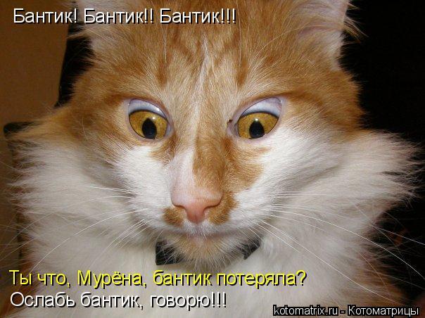 Котоматрица: Бантик! Бантик!! Бантик!!! Ты что, Мурёна, бантик потеряла? Ослабь бантик, говорю!!!