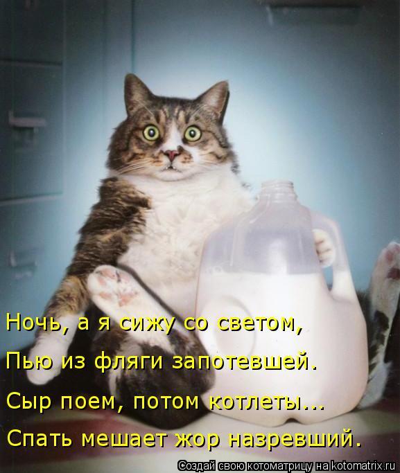 Котоматрица: Спать мешает жор назревший. Сыр поем, потом котлеты... Пью из фляги запотевшей. Ночь, а я сижу со светом,