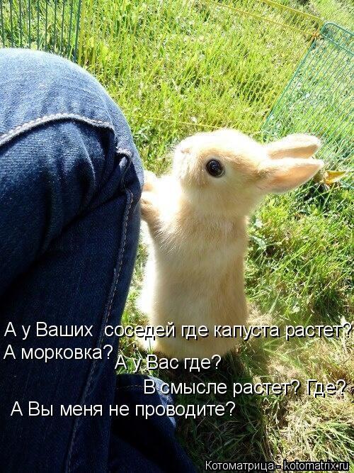 Котоматрица: А у Ваших  соседей где капуста растет? А морковка? А у Вас где? В смысле растет? Где? А Вы меня не проводите?