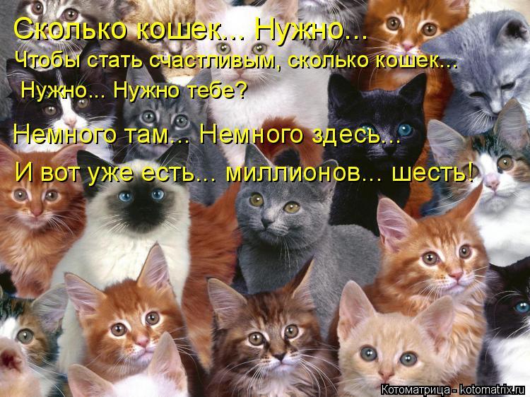 Котоматрица: Сколько кошек... Нужно...  Чтобы стать счастливым, сколько кошек... Нужно... Нужно тебе? Немного там... Немного здесь... И вот уже есть... миллионов..