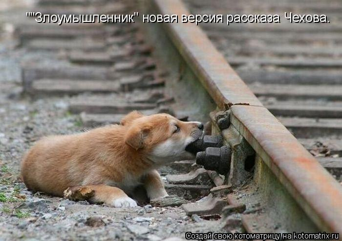 """Котоматрица: """"""""Злоумышленник"""" новая версия рассказа Чехова."""