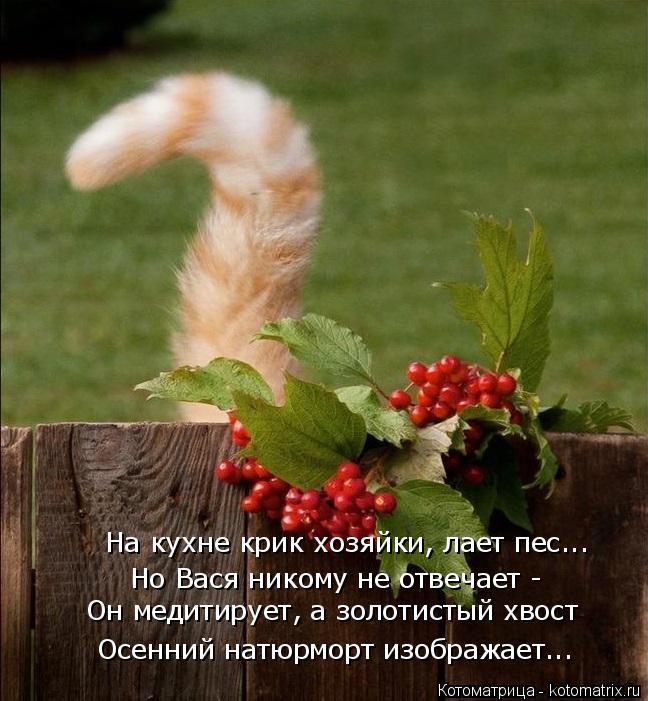 Котоматрица: На кухне крик хозяйки, лает пес... Но Вася никому не отвечает - Он медитирует, а золотистый хвост Осенний натюрморт изображает...