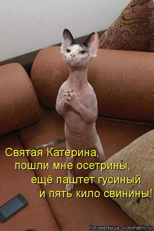 Котоматрица - 4 - Страница 10 Kotomatritsa_R