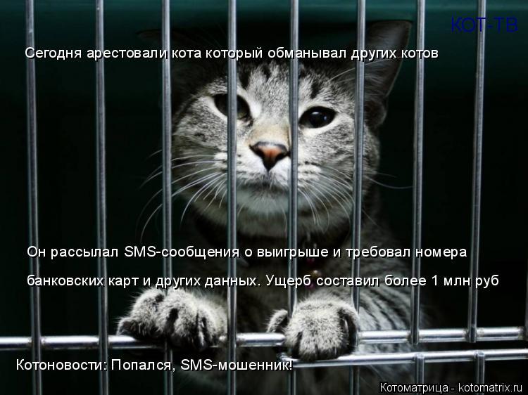 Котоматрица: КОТ-ТВ Котоновости: Попался, SMS-мошенник! Сегодня арестовали кота который обманывал других котов Он рассылал SMS-сообщения о выигрыше и требо