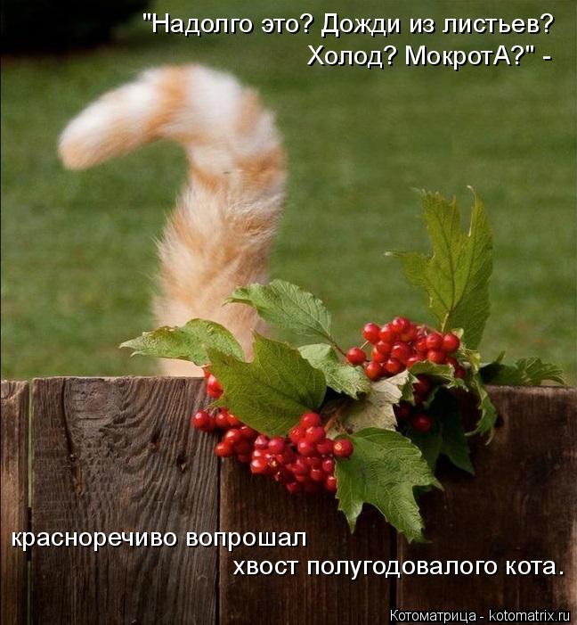 """Котоматрица: """"Надолго это? Дожди из листьев?  Холод? МокротА?"""" -  красноречиво вопрошал  хвост полугодовалого кота."""