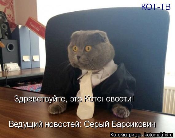 Котоматрица: КОТ-ТВ Здравствуйте, это Котоновости! Ведущий новостей: Серый Барсикович