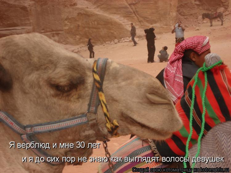 Котоматрица: Я верблюд и мне 30 лет и я до сих пор не знаю как выглядят волосы девушек