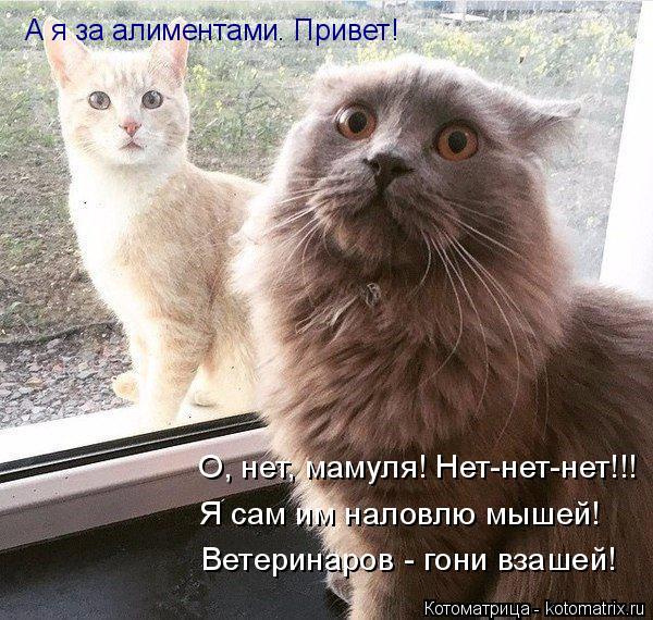 Котоматрица: А я за алиментами. Привет! О, нет, мамуля! Нет-нет-нет!!! Я сам им наловлю мышей! Ветеринаров - гони взашей!