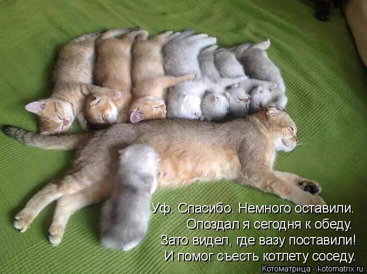 Котоматрица - 4 - Страница 10 Kotomatritsa_4