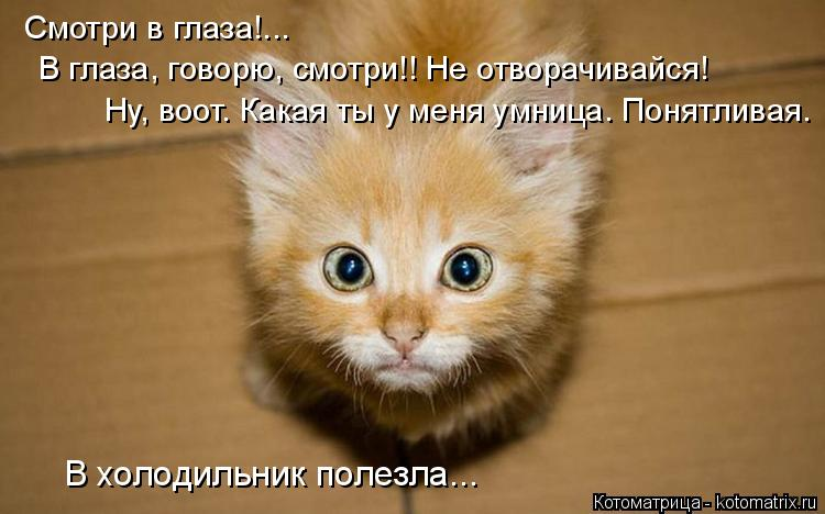 Котоматрица: Смотри в глаза!... В глаза, говорю, смотри!! Не отворачивайся! Ну, воот. Какая ты у меня умница. Понятливая. В холодильник полезла...