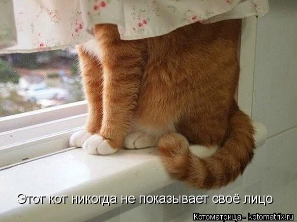 Котоматрица: Этот кот никогда не показывает своё лицо