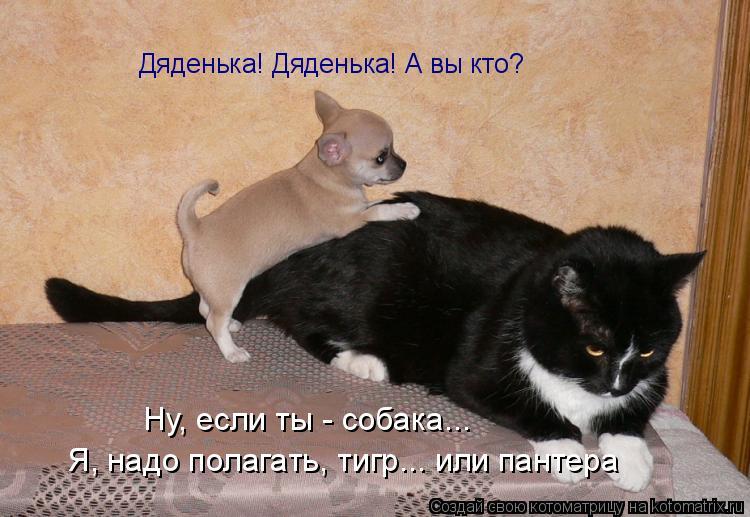 Котоматрица: Дяденька! Дяденька! А вы кто? Ну, если ты - собака... Я, надо полагать, тигр... или пантера