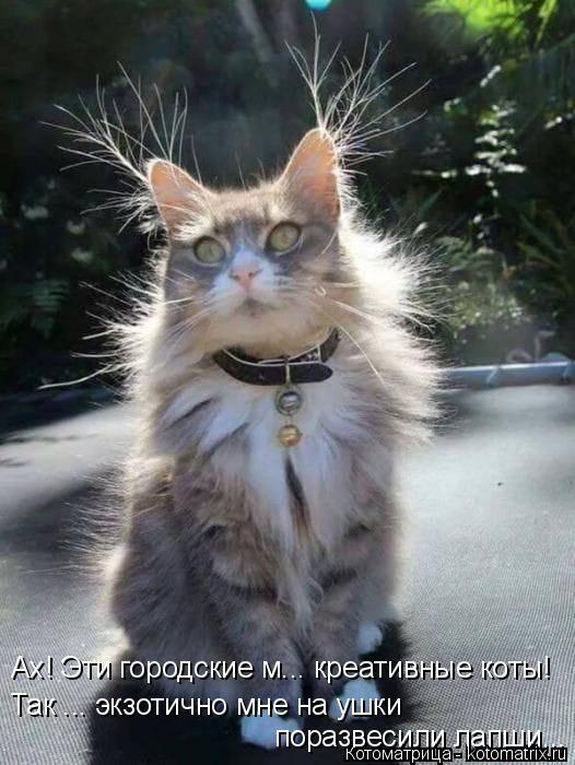 Котоматрица: Ах! Эти городские м... креативные коты! Так ... экзотично мне на ушки  поразвесили лапши...
