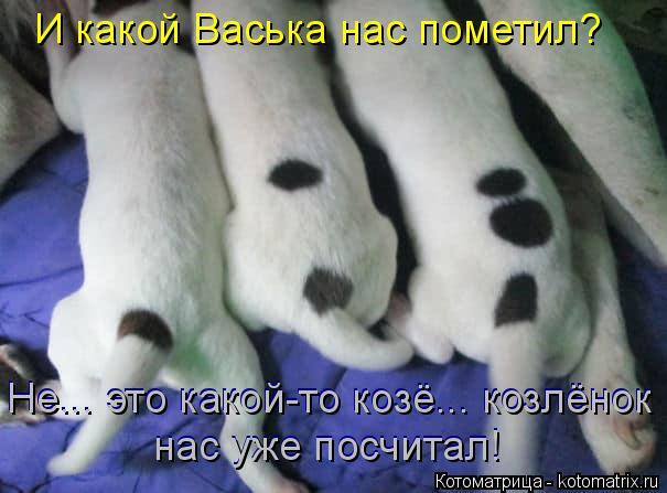 Котоматрица: И какой Васька нас пометил? Не... это какой-то козё... козлёнок Не... это какой-то козё... козлёнок нас уже посчитал! нас уже посчитал!