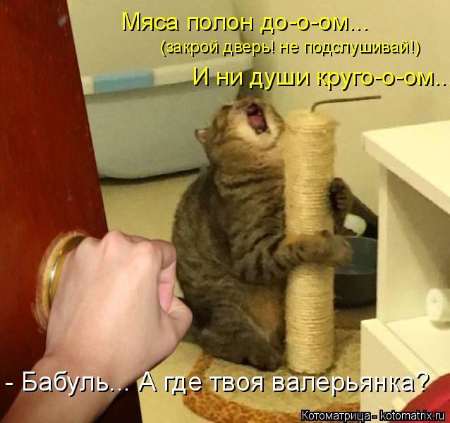 Котоматрица: - Бабуль... А где твоя валерьянка? (закрой дверь! не подслушивай!) И ни души круго-о-ом... Мяса полон до-о-ом...