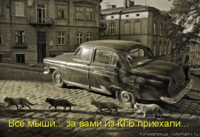 Котоматрица: Всё мыши... за вами из КГБ приехали...