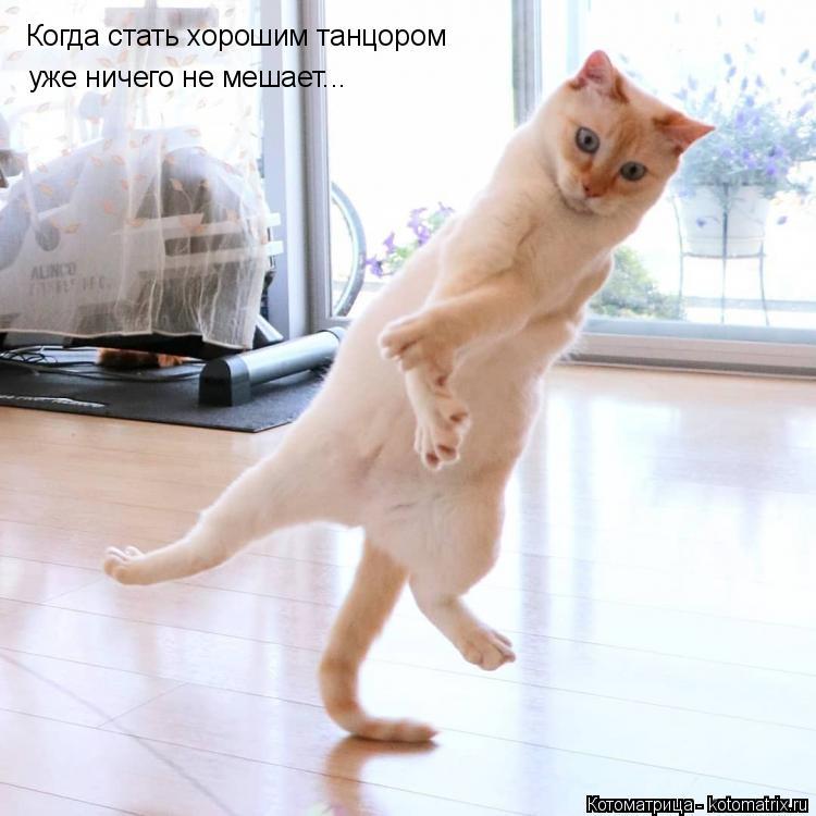 Котоматрица: Когда стать хорошим танцором уже ничего не мешает...