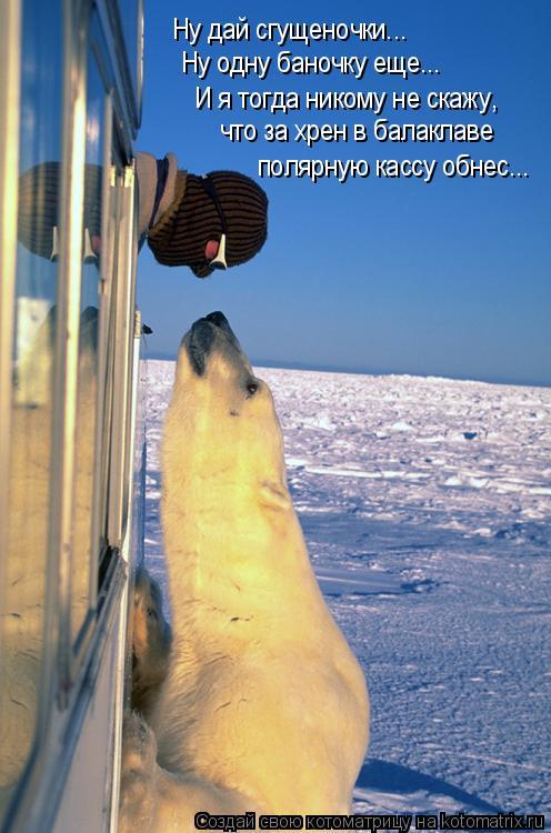 Котоматрица: Ну дай сгущеночки...  Ну одну баночку еще... И я тогда никому не скажу, что за хрен в балаклаве полярную кассу обнес...