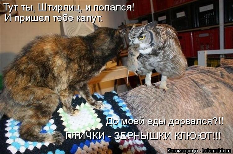 Котоматрица: И пришел тебе капут. До моей еды дорвался?!! ПТИЧКИ - ЗЕРНЫШКИ КЛЮЮТ!!! Тут ты, Штирлиц, и попался!