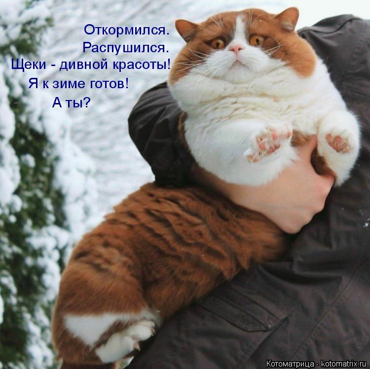 Котоматрица: Распушился. Откормился.  Щеки - дивной красоты! Я к зиме готов! А ты?