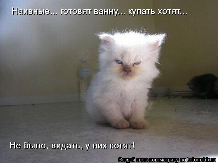 Котоматрица: Наивные... готовят ванну... купать хотят... Не было, видать, у них котят!
