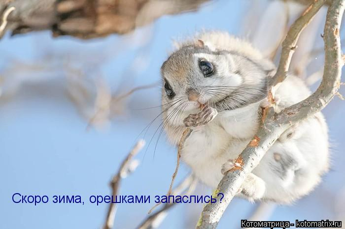 Котоматрица: Скоро зима, орешками запаслись?