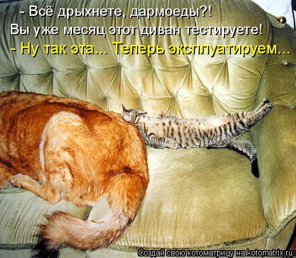 Котоматрица: - Всё дрыхнете, дармоеды?! Вы уже месяц этот диван тестируете! - Ну так эта... Теперь эксплуатируем...