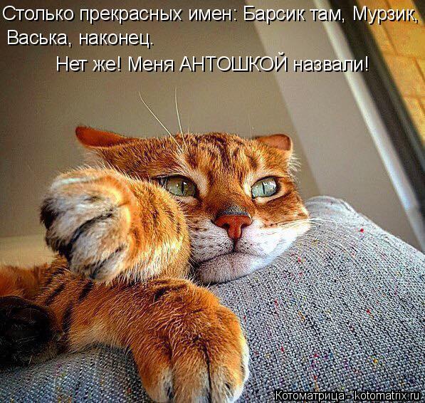 Котоматрица: Васька, наконец. Столько прекрасных имен: Барсик там, Мурзик,  Нет же! Меня АНТОШКОЙ назвали!