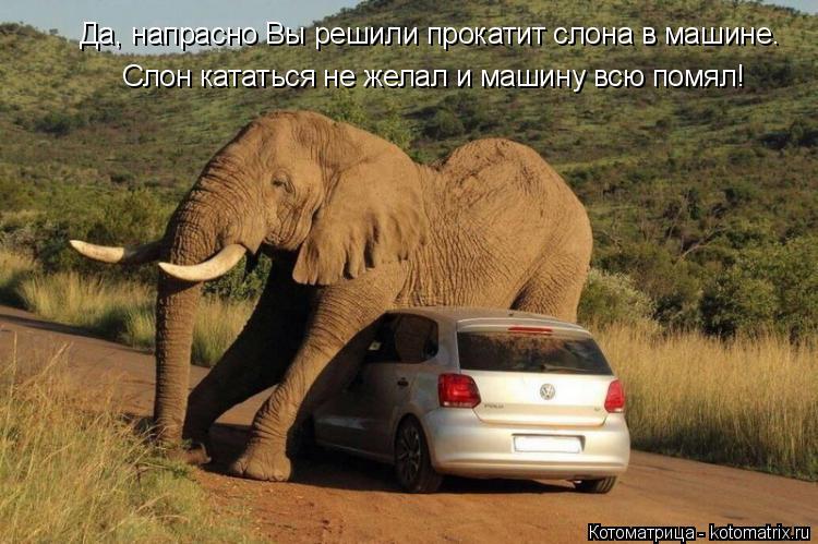 Котоматрица: Да, напрасно Вы решили прокатит слона в машине. Слон кататься не желал и машину всю помял!