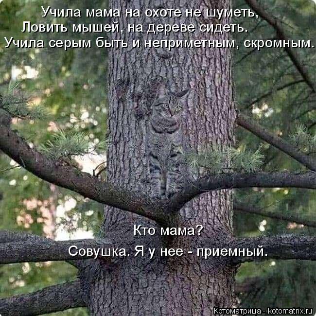 Котоматрица: Ловить мышей, на дереве сидеть. Учила серым быть и неприметным, скромным. Учила мама на охоте не шуметь, Совушка. Я у нее - приемный. Кто мама?