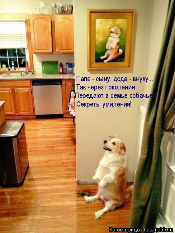 Котоматрица: Папа - сыну, деда - внуку... Так через поколения Передают в семье собачьей Секреты умиления!