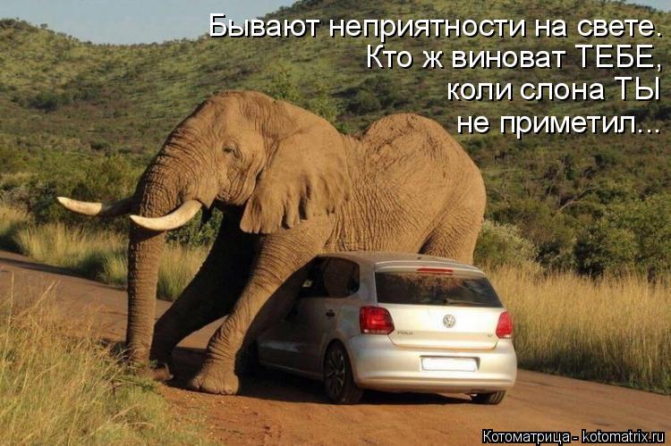 Котоматрица: Бывают неприятности на свете. Кто ж виноват ТЕБЕ, коли слона ТЫ не приметил...