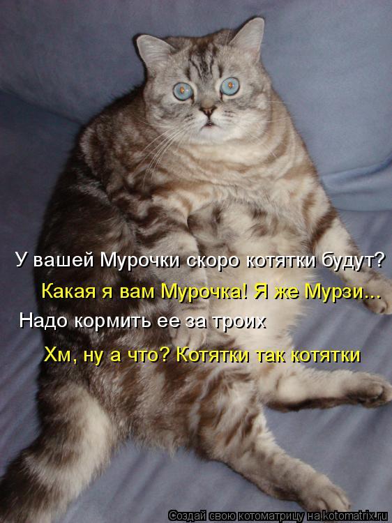 Котоматрица: У вашей Мурочки скоро котятки будут?  Какая я вам Мурочка! Я же Мурзи... Надо кормить ее за троих Хм, ну а что? Котятки так котятки
