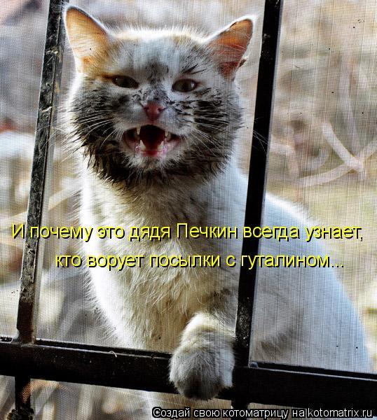 Котоматрица: И почему это дядя Печкин всегда узнает, кто ворует посылки с гуталином...
