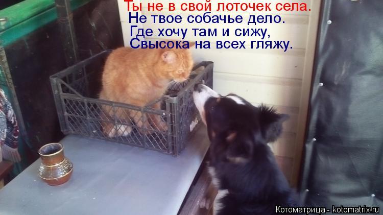 Котоматрица: Ты не в свой лоточек села. Не твое собачье дело. Где хочу там и сижу, Свысока на всех гляжу.