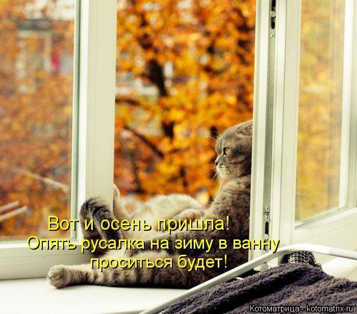 Котоматрица: Вот и осень пришла! Опять русалка на зиму в ванну  проситься будет!