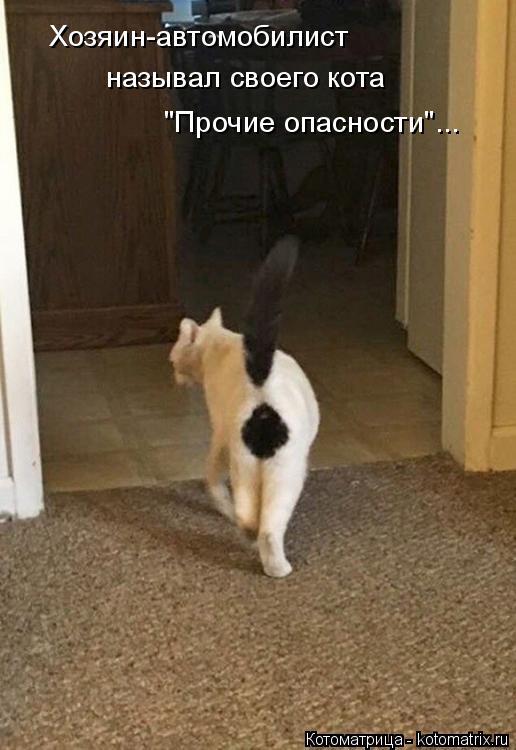 """Котоматрица: Хозяин-автомобилист называл своего кота """"Прочие опасности""""..."""