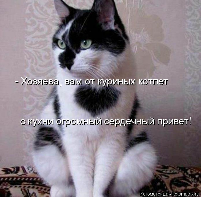 Котоматрица: - Хозяева, вам от куриных котлет с кухни огромный сердечный привет!