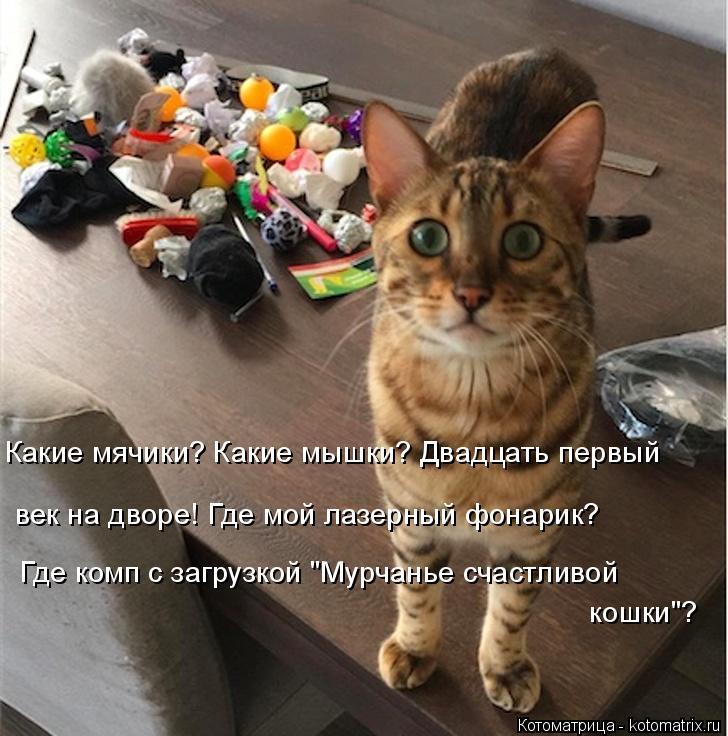 """Котоматрица: Какие мячики? Какие мышки? Двадцать первый Где комп с загрузкой """"Мурчанье счастливой кошки""""? век на дворе! Где мой лазерный фонарик?"""