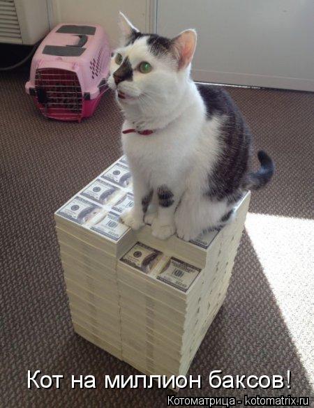 Котоматрица: Кот на миллион баксов!
