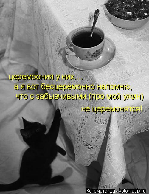 Котоматрица: церемоония у них.... а я вот бесцеремонно напомню,  что с забывчивыми (про мой ужин) не церемонятся!