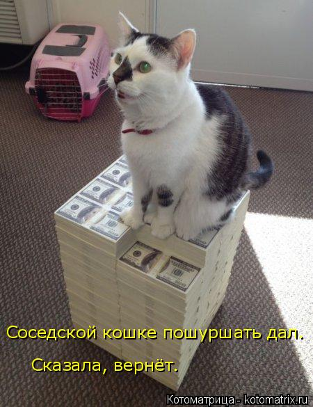 Котоматрица: Соседской кошке пошуршать дал.  Сказала, вернёт.