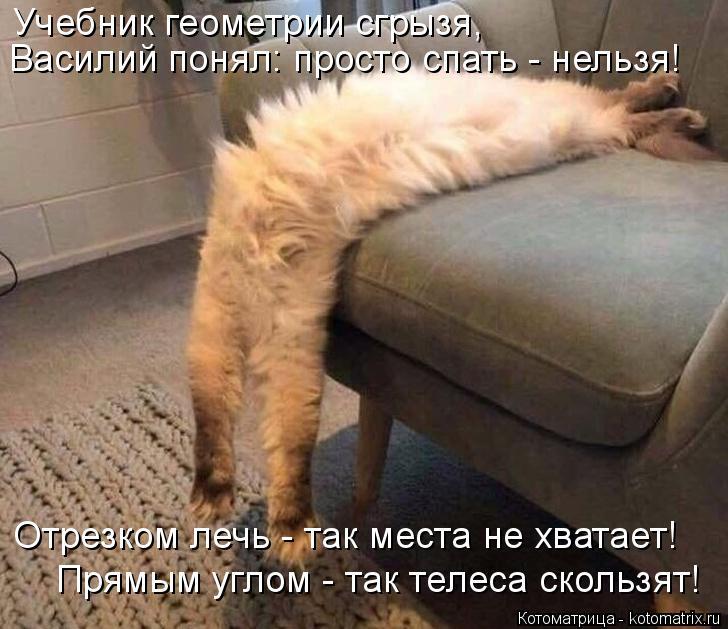 Котоматрица: Учебник геометрии сгрызя, Василий понял: просто спать - нельзя! Отрезком лечь - так места не хватает! Прямым углом - так телеса скользят!