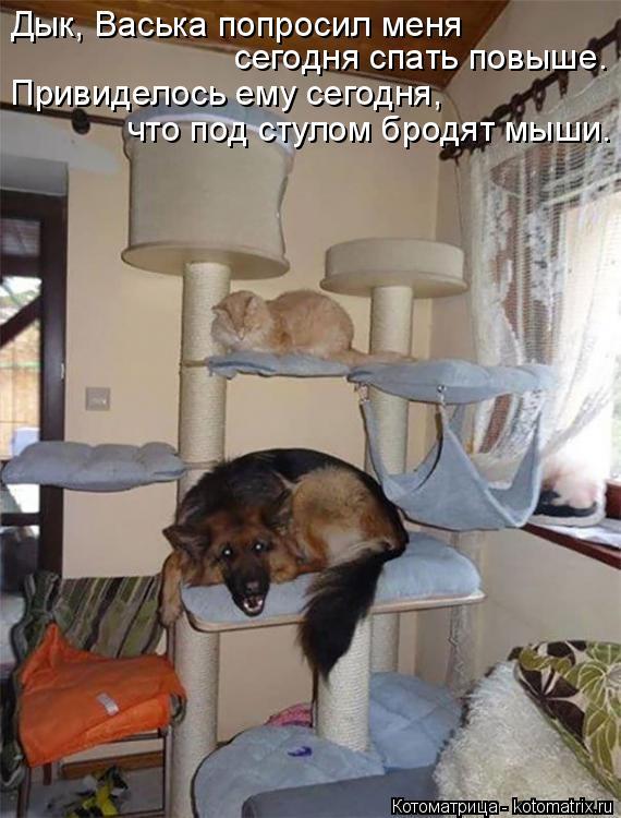 Котоматрица: Дык, Васька попросил меня  сегодня спать повыше. Привиделось ему сегодня,  что под стулом бродят мыши.