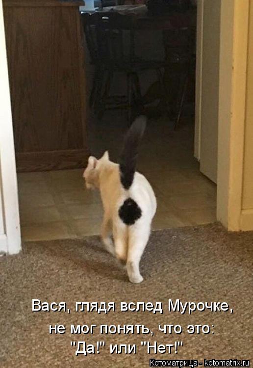 """Котоматрица: Вася, глядя вслед Мурочке, не мог понять, что это: """"Да!"""" или """"Нет!"""""""