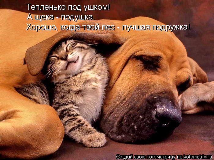Котоматрица: Тепленько под ушком! А щека - подушка. Хорошо, когда твой пес - лучшая подружка!