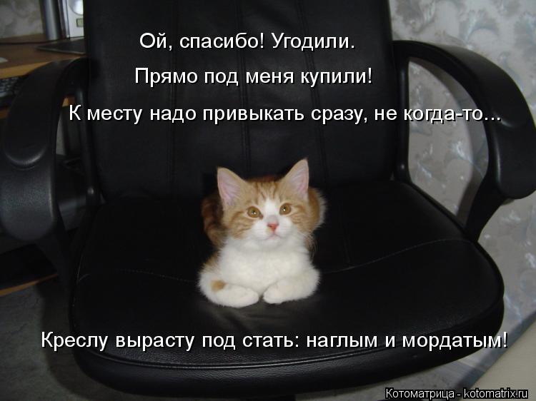 Котоматрица: Креслу вырасту под стать: наглым и мордатым! К месту надо привыкать сразу, не когда-то... Ой, спасибо! Угодили. Прямо под меня купили!