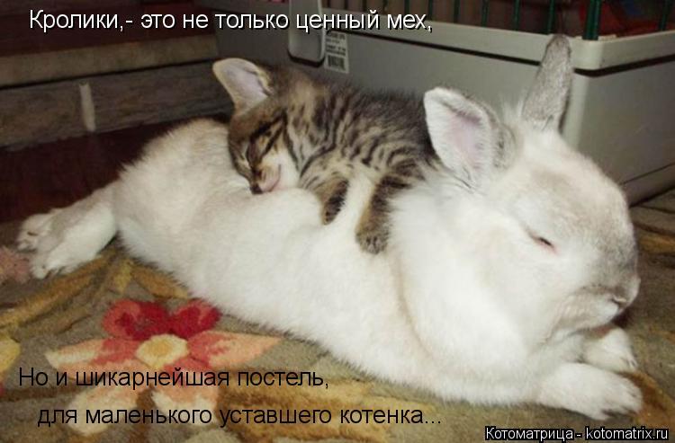 Котоматрица: Кролики,- это не только ценный мех, Но и шикарнейшая постель, для маленького уставшего котенка...