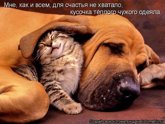 Котоматрица: Мне, как и всем, для счастья не хватало, кусочка тёплого чужого одеяла.