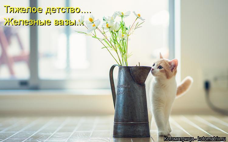 Котоматрица: Тяжелое детство.... Железные вазы...